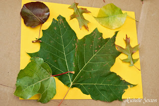 Leaves taped onto paper