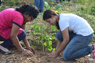 Tree Plantation,oxygen,environment,trees play an important, role-in our daily life,