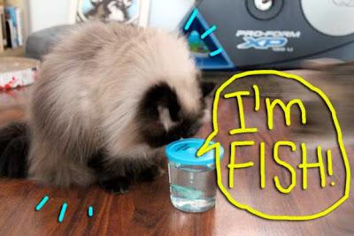 cat-fish-02