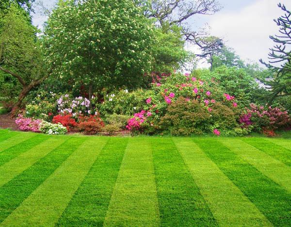http://2.bp.blogspot.com/-a-ioX0spY9Q/Tz0wQ_xwgOI/AAAAAAAAGMs/LSO8MOfoPeQ/s1600/lawn.jpg