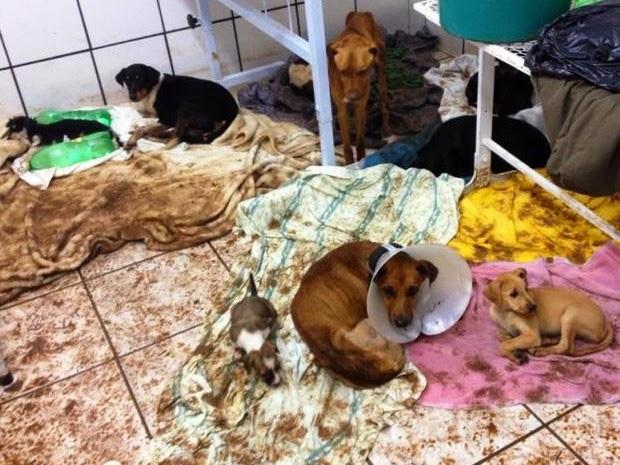 Filhotes de cães e gatos morreram afogados no abrigo (Foto: Andre Shimada / Arquivo Pessoal)