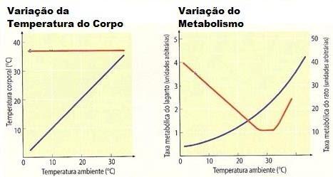 Animal endotermico
