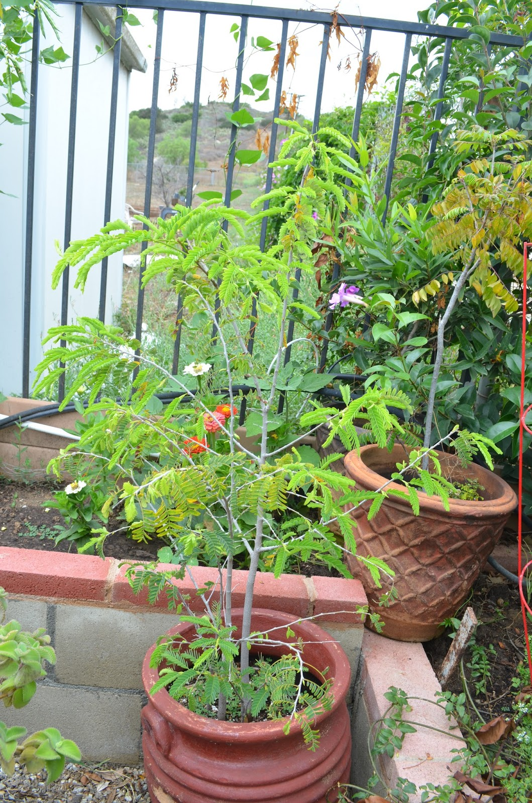 Planning A Kitchen Garden Entertaining From An Ethnic Indian Kitchen Kitchen Garden Tour In