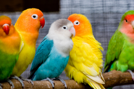Beautiful Love Birds 2