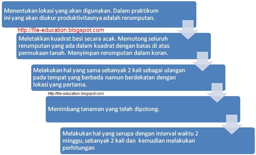 Praktikum Ekologi Tumbuhan Produktivitas Alsen Saloka Blog S