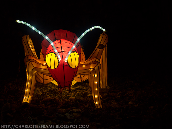 China Light Insecten, China Light Insects,