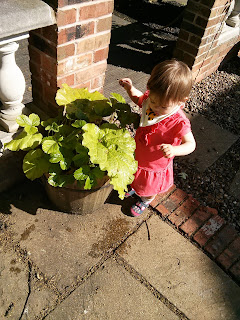 checking plants