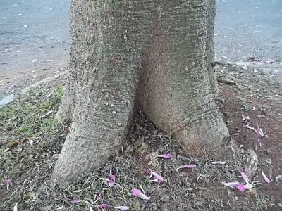 árvores, água, poemas, meio ambiente