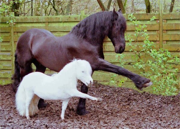 Funny animals of the week - 28 March 2014 (40 pics), horse and mini horse