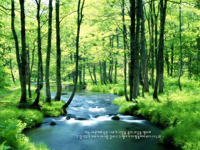 high clarity green color images  nature green color pictures  leaf