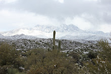 """Four Peaks Wilderness Area"""