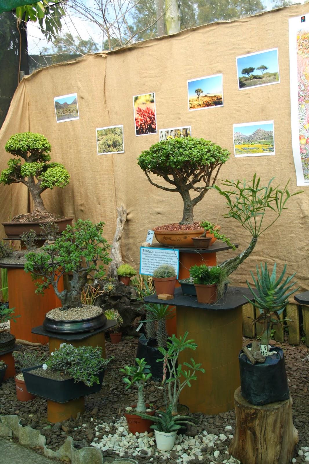 BORDER BONSAI SOCIETY Bonsai Through The South African Biomes