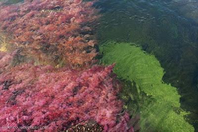 cano cristales 5%255B2%255D أجمل أنهار العالم ، نهر كانو كريستال ذو الألوان الخمسة في كولومبيا