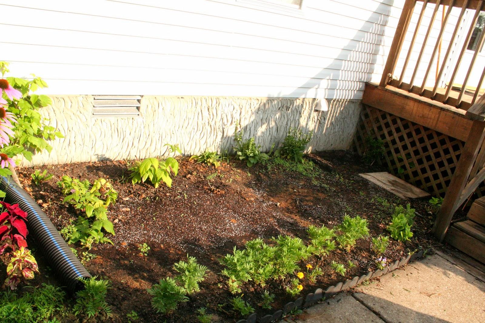 meanderings . . . : garden journal: warning! photo heavy!