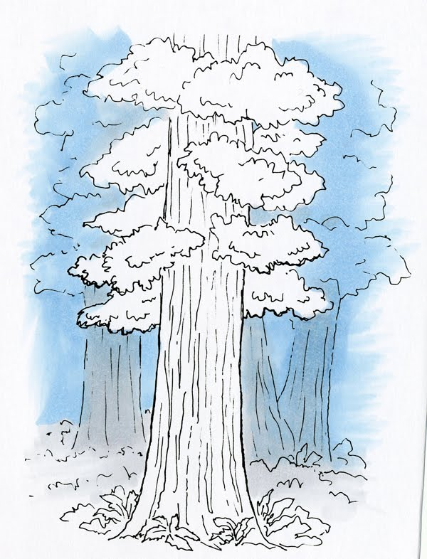 california redwood coloring pages - photo#9
