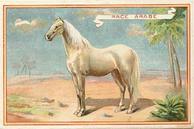 Vintage Graphic White Horse
