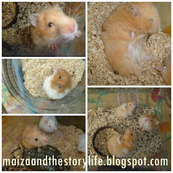 my hamster : D