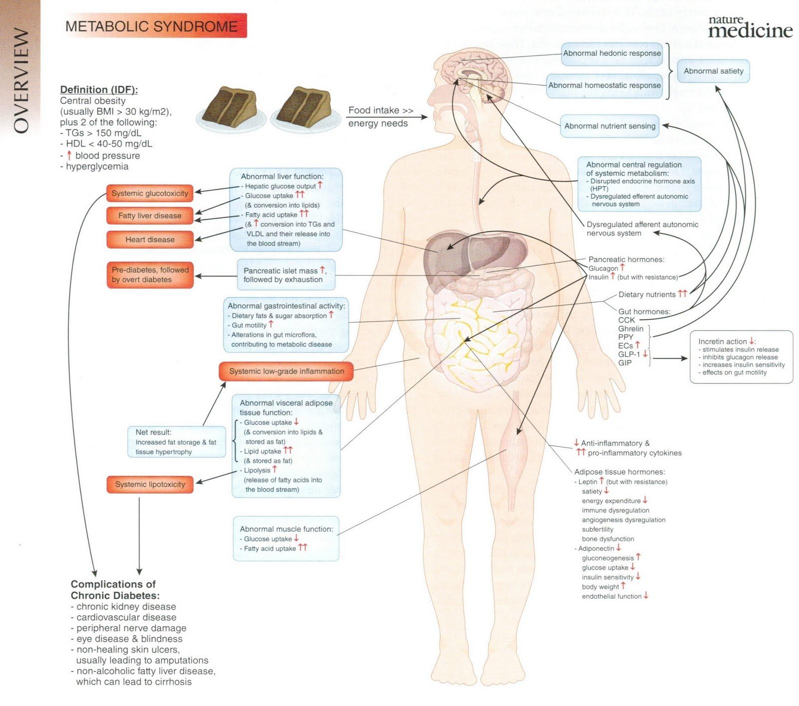 deb homeostasis Deborah sloboda phd associate  (2014) early life exposure to fructose and offspring phenotype: implications for long-term metabolic homeostasis journal of .