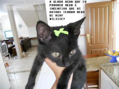 """Foto do blog """"Borges, o Gato"""", contra preconceito divulgado pela novela Avenida Brasil"""