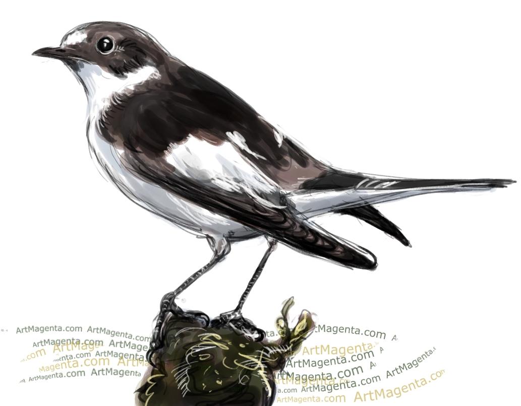 En fågelmålning av en svartvit flugsnappare från Artmagentas svenska galleri om fåglar