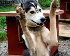 Welcome to Happy Sled Dogs Blog!