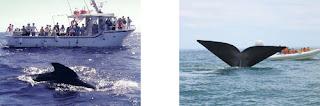 avistamiento ballenas con niños