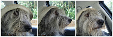 William the Lurcher Blog........