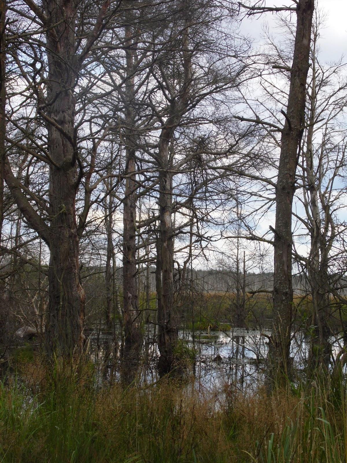 Rezerwat i obszar natura 2000 Bielawskie Błota