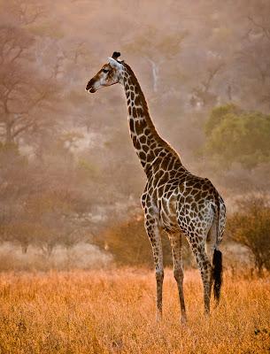 Fotos e imágenes muy bacanas de animales, flores y paisajes