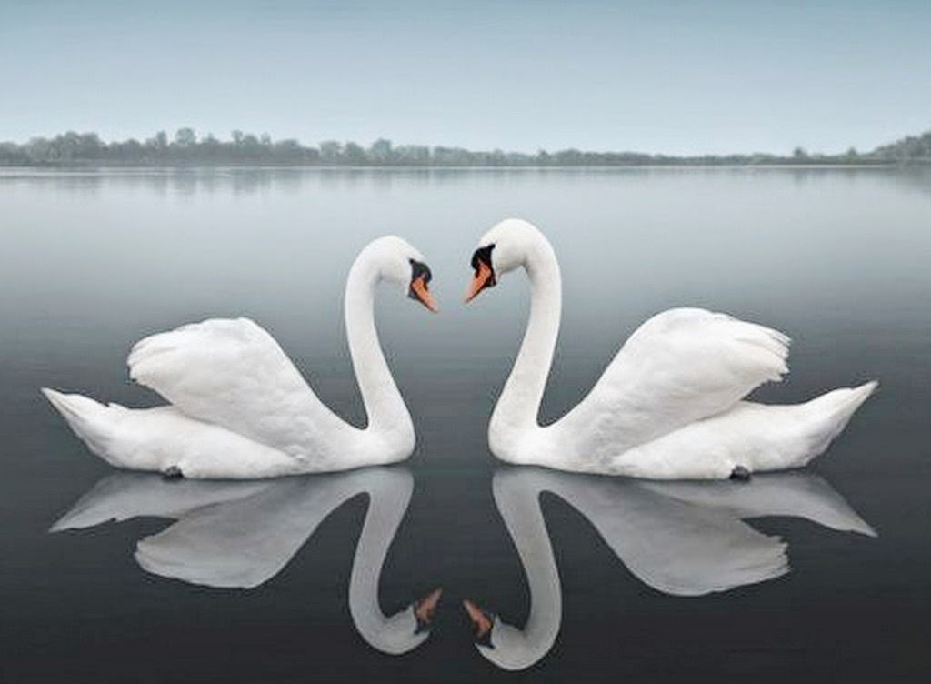 corazon y rosas en movimiento para enamorar reflejada en  - Fotos De Flores Reflejadas En Agua