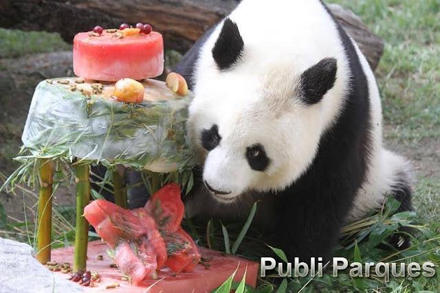Cumpleaños panda (Foto Jeroen Jacobs)