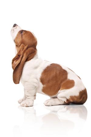SophieWebWay: Hush Puppies, la marque au basset !