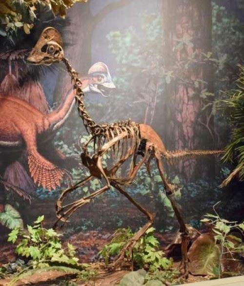 Meet the prehistoric