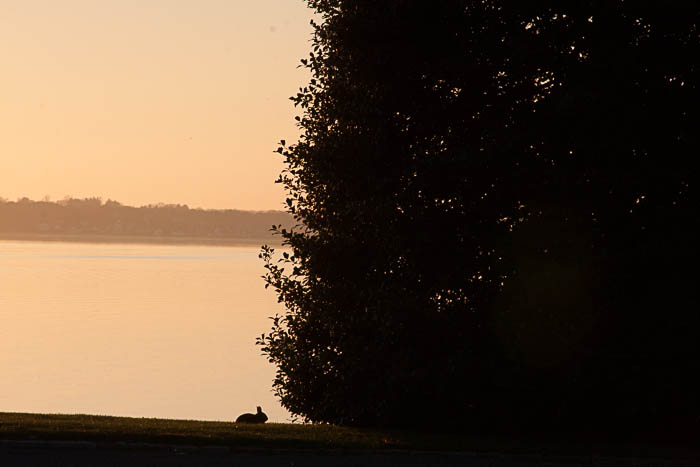 silhouette of a rabbit next to a tree at sunset