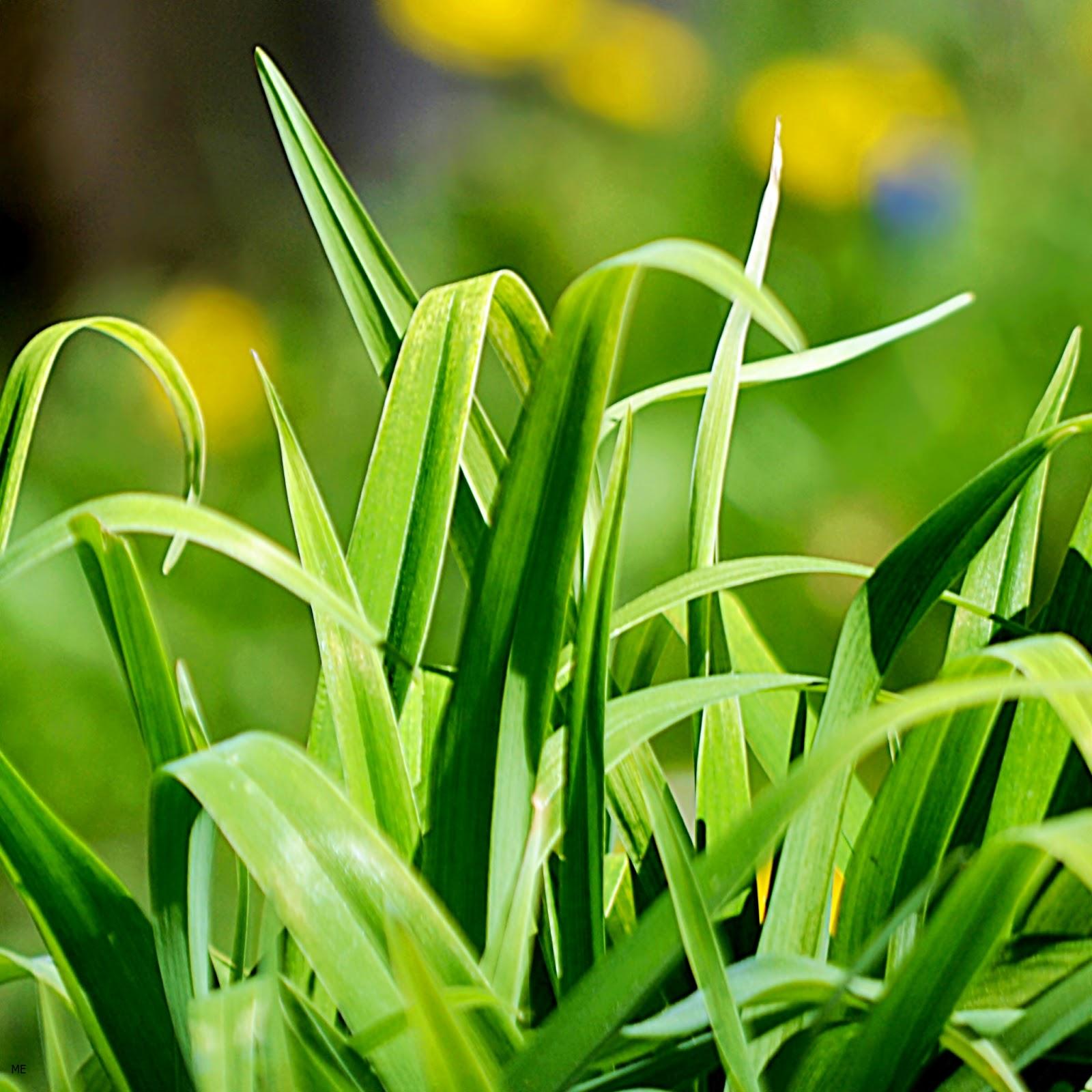 http://2.bp.blogspot.com/-a4ksmpA3MPQ/UUchc3AIt4I/AAAAAAAADx4/BRGbLV0uAvs/s1600/Green-Nature-Grass-ipad4-iphone5-hd-tablet-wallpaper.jpg