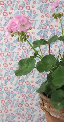 pink pelargonium, pastel, wallpaper with flowers, cracked flowerpot, ByHaafner