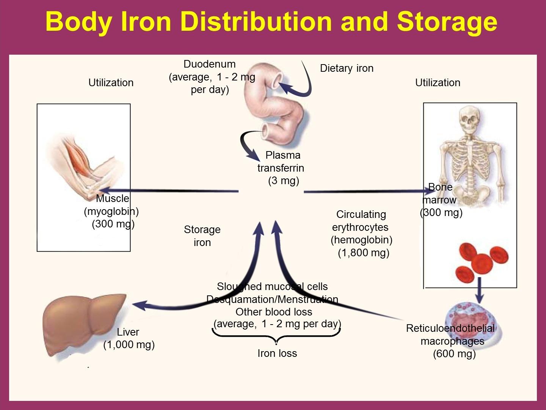 iron anemia: