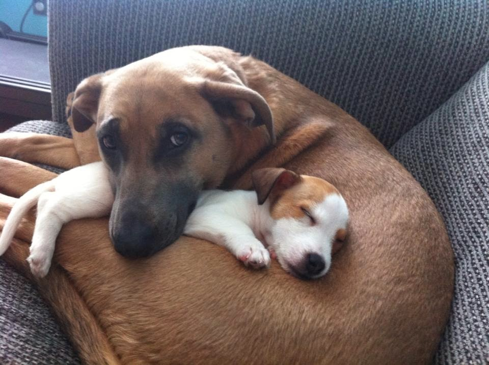 Cute dogs - part 15 (50 pics), funny dog pictures, cute pet pictures, puppy pics