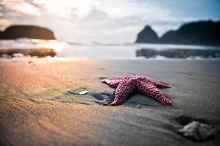 Sexy Star Beach Water Sun Beautiful HD Wallpaper