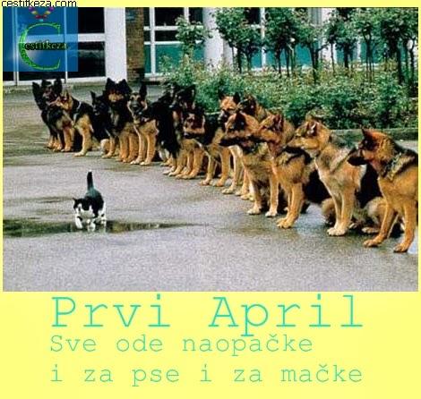 prvi april sve ode naopačke i za pse i za mačke