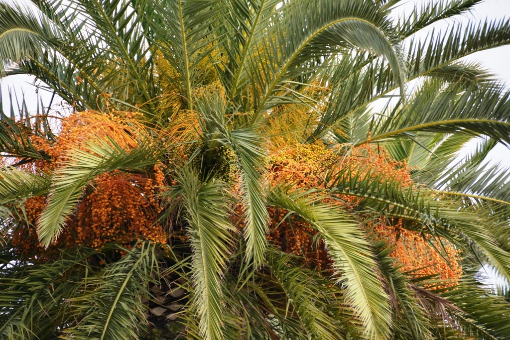 Heroes of Cavite Cartagena Palm Trees