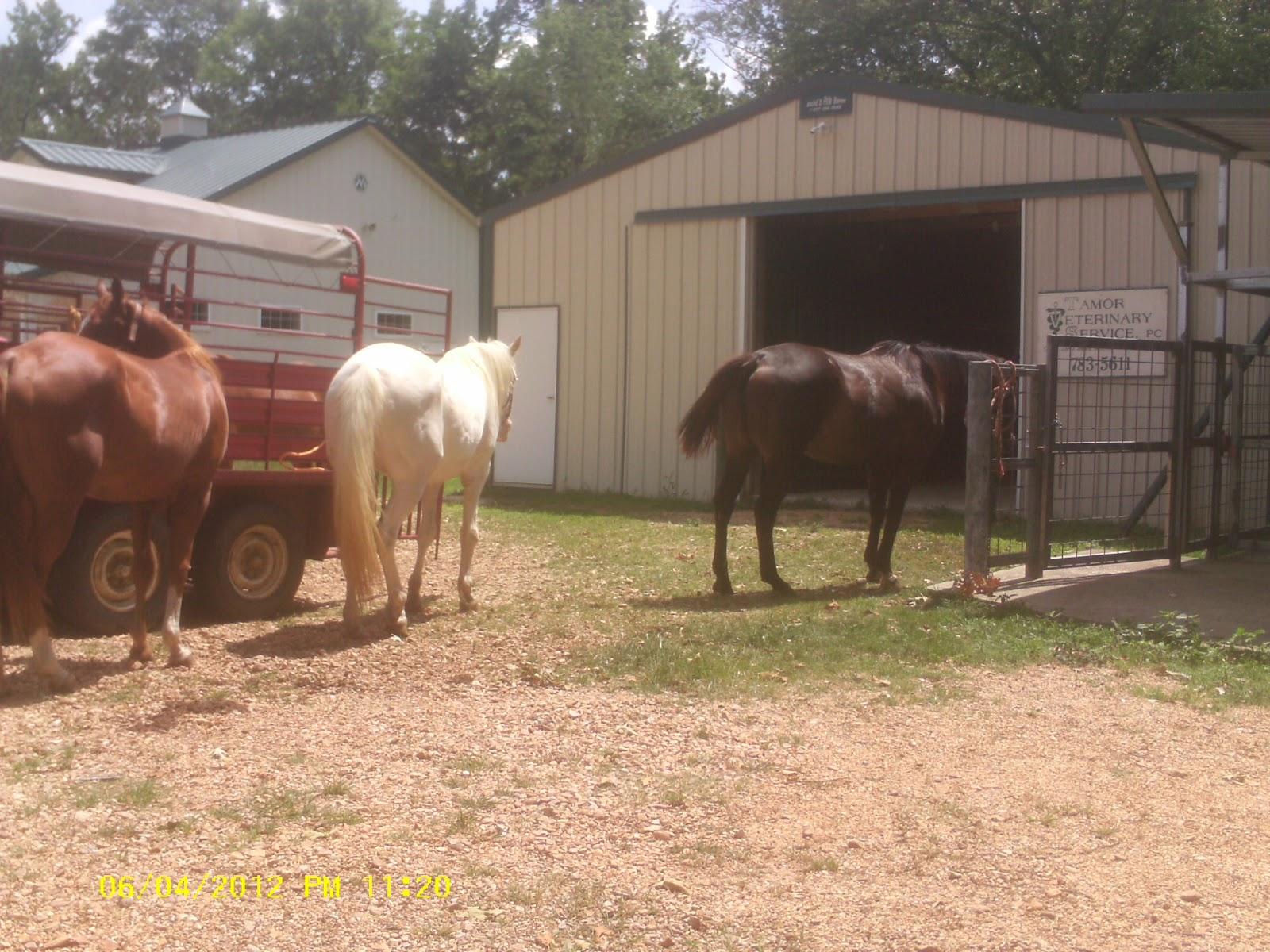 Good   Wallpaper Horse Flicka - IMAG0084  Image_1285.JPG