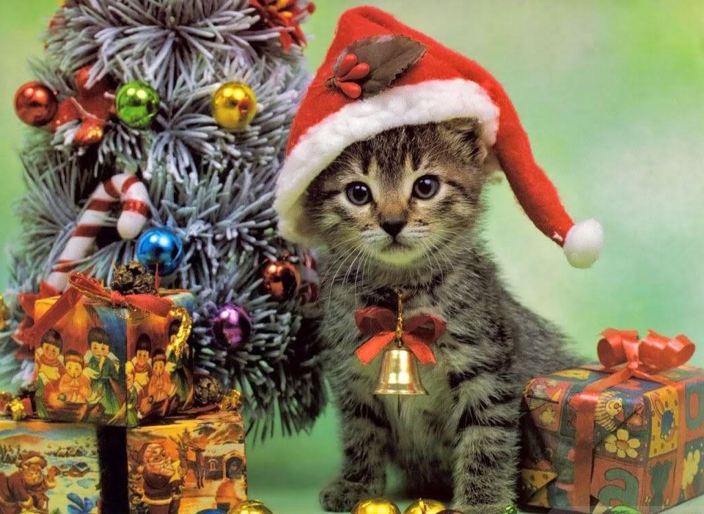 Katzen Weihnachtsbilder