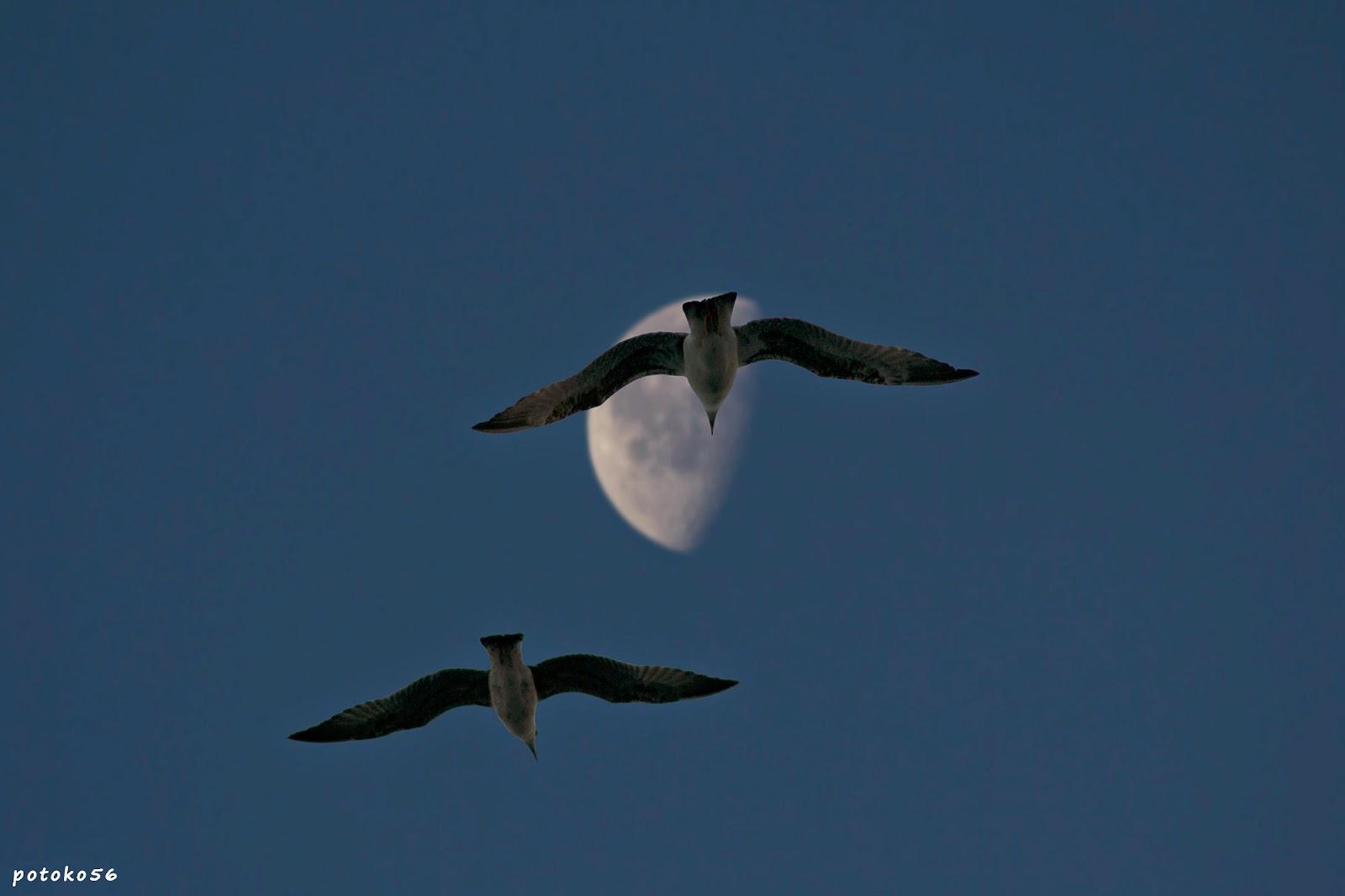 La luna y las Gaviotas muelle de Rota