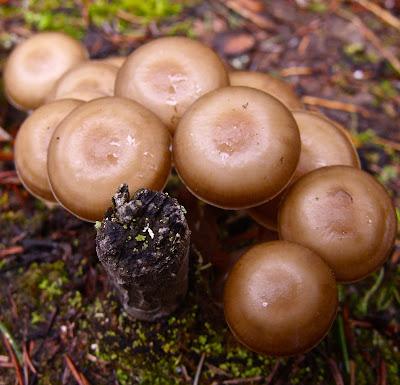 mushrooms in glacier national park