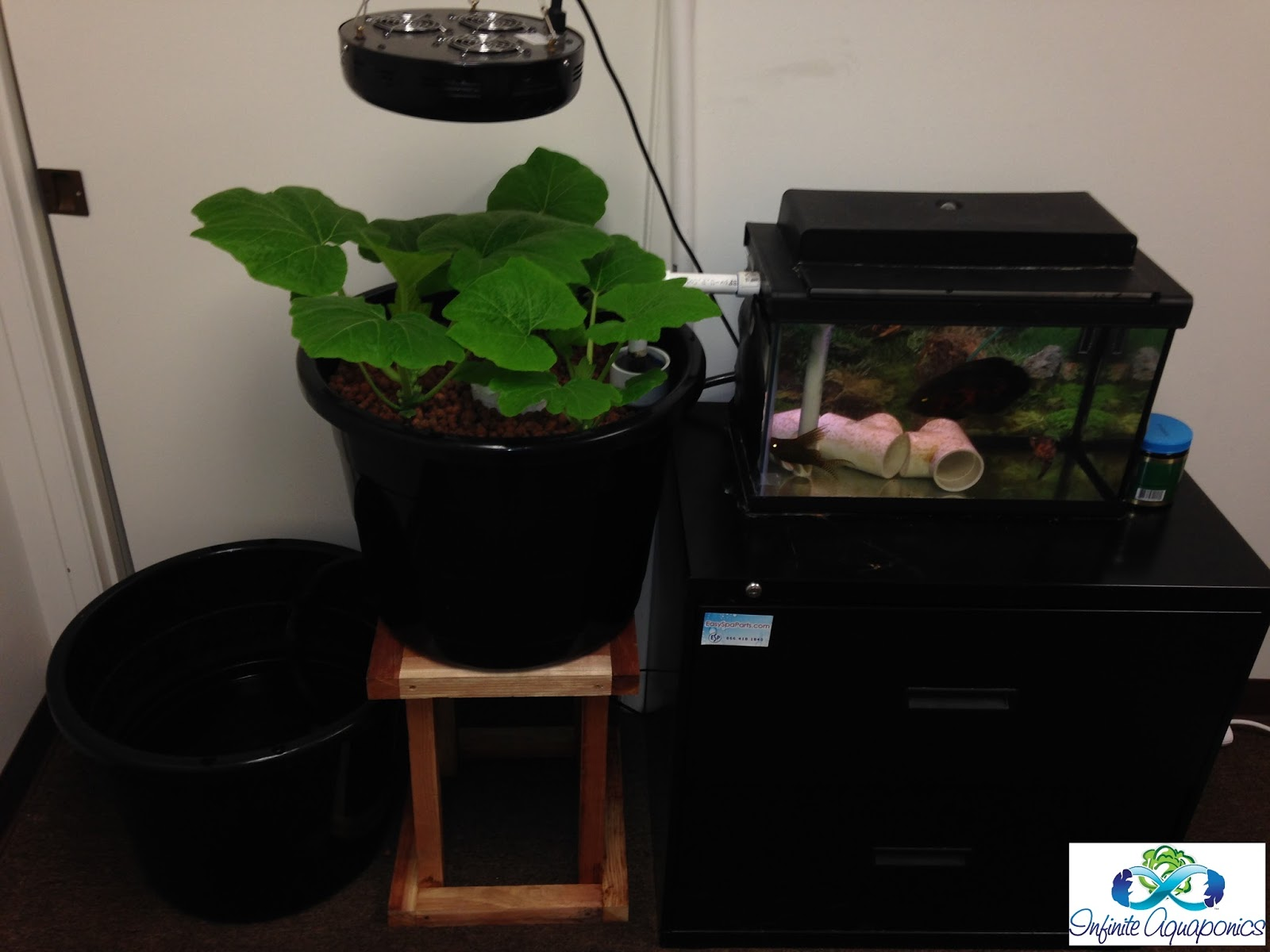 how to make cheap aquaponics system