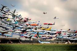 Mange fly
