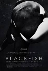 eco view: blackfish