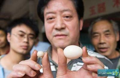 عالم الغرائب، الأطعمة، حيوانات، بيضة لا تتعدى 2 سنتمتر