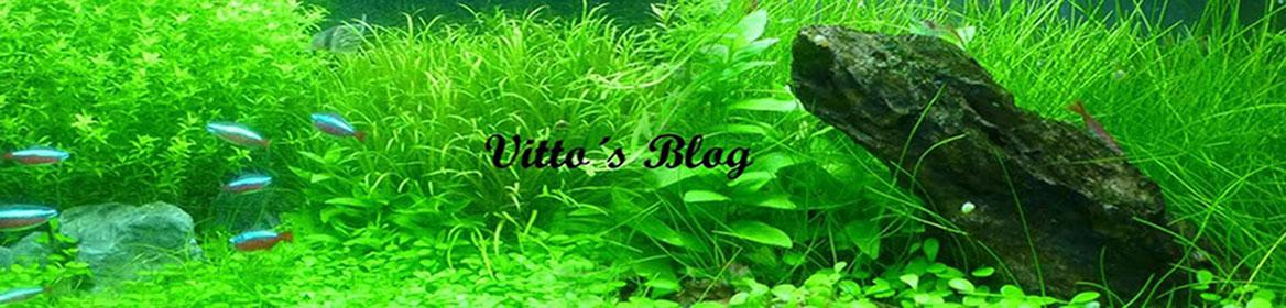 Vitto´s blog